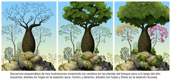 Ilustraciones_bosque_seco-1-600x286