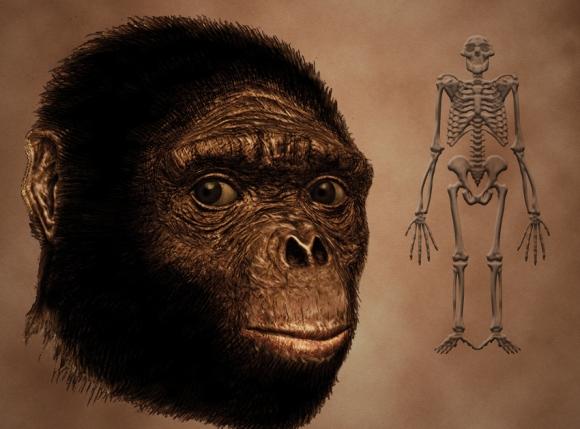 rostro-y-esqueleto